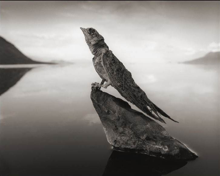 8C9251678-131002-nick-brandt-bird-02.blocks_desktop_large