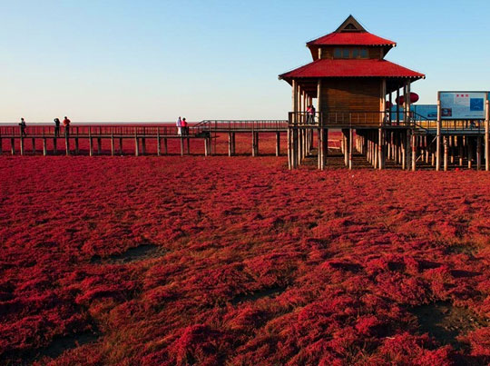 Playa Roja en China. Foto de travel.mthai