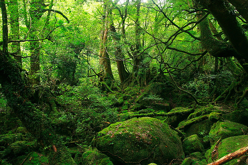 bosque cuento de hadas Broceliande